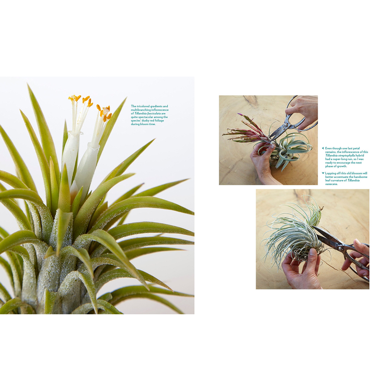 Air Plant Book by Zenaida Sengo Inside Page Caring for Air Plants
