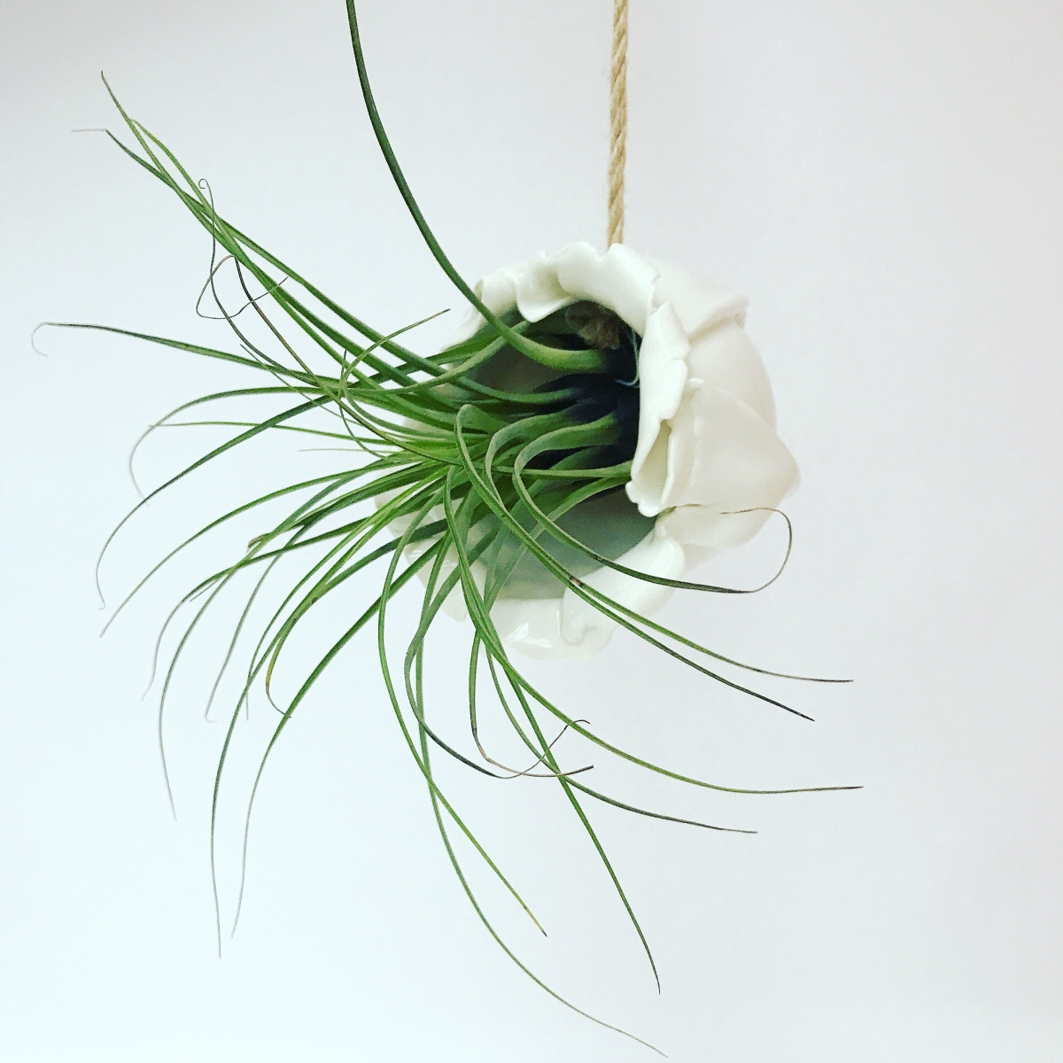 Air Plant Holder Front View by Sonya Ceramic Art