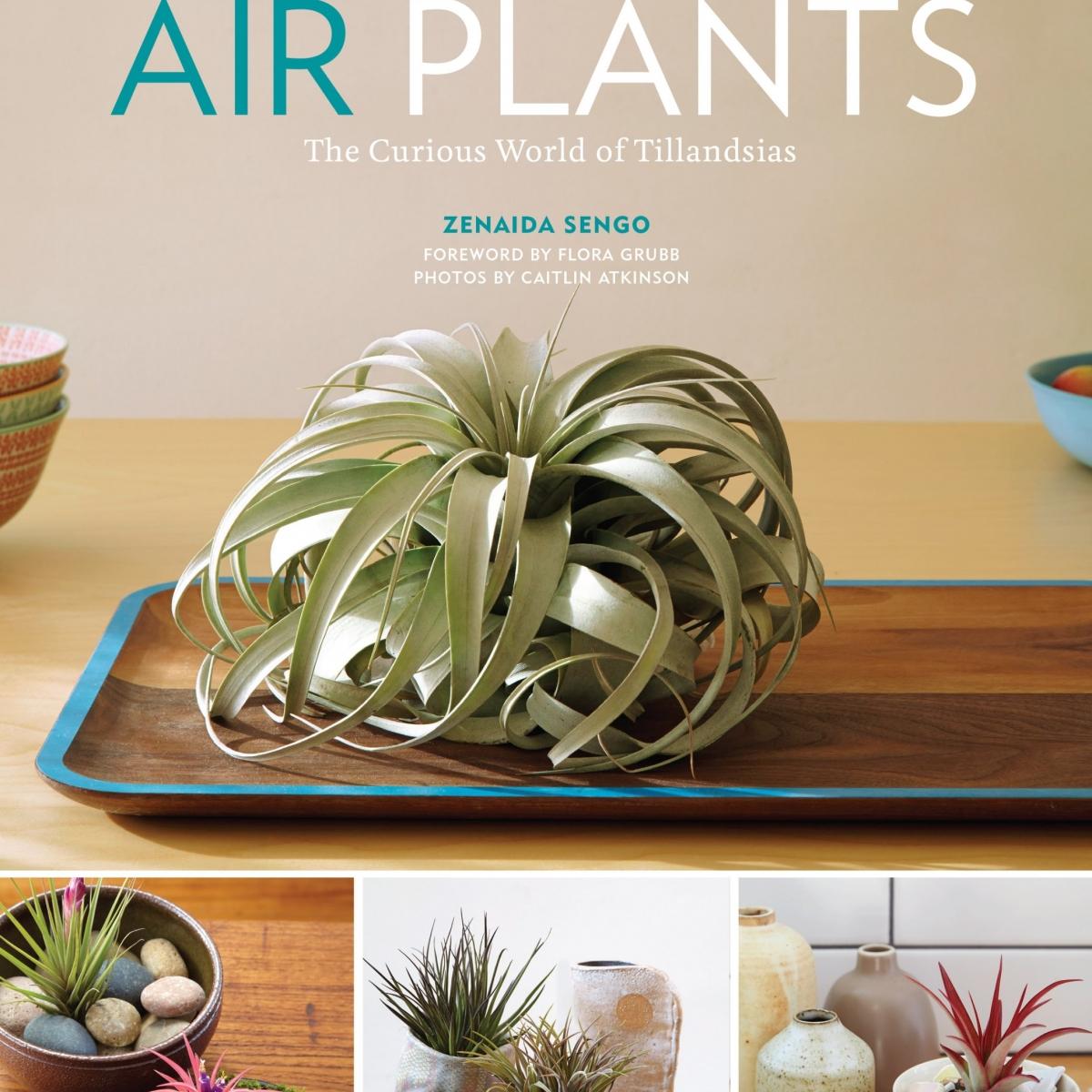 Air Plants Book by Zenaida Sengo
