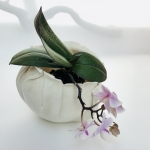 Orchid Nest by Sonya Ceramic Art