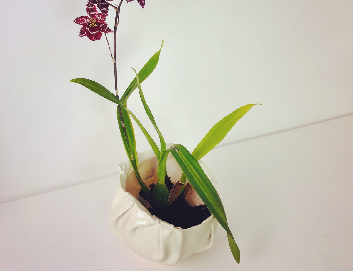 Porcelain Orchid Nest by Sonya Ceramic Art