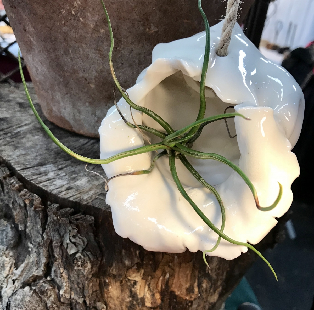 Small Porcelain Air Plant Holder Front View by Sonya Ceramic Art