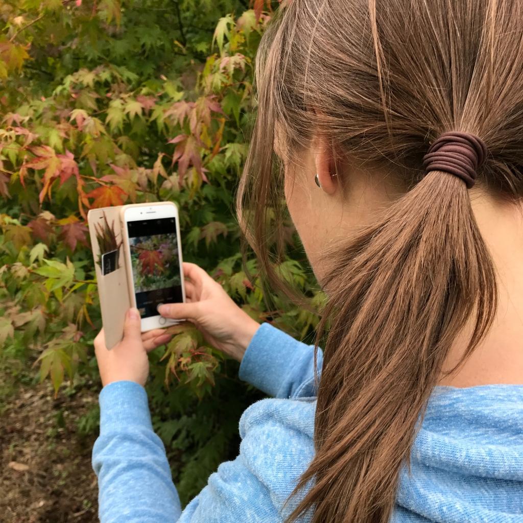 Sonya Wilkiins photographing leaves at Westonbirt Arboretum