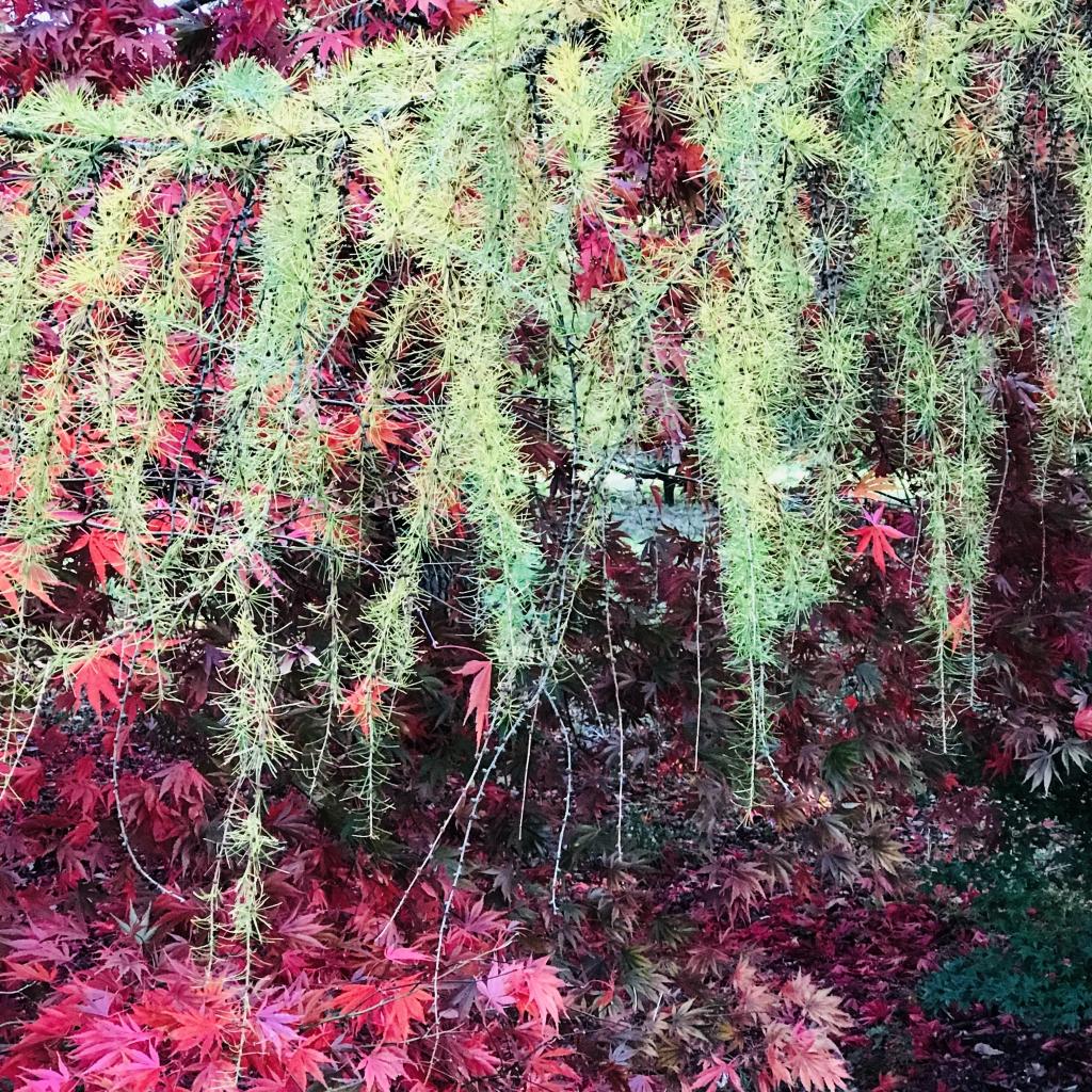 Westonbirt Arboretum Contrasting Colours
