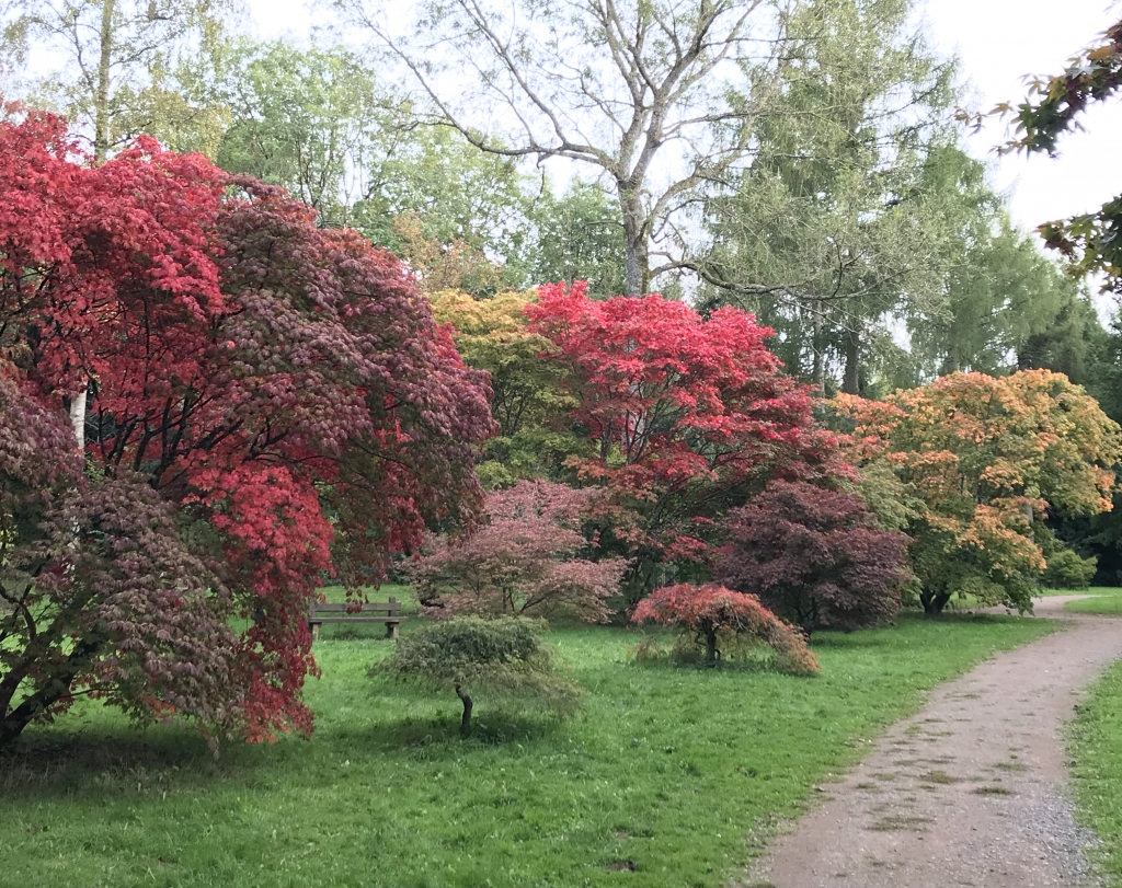 Westonbirt Arboretum Inspiration for Sonya Ceramic Art
