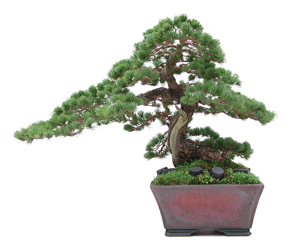 Dan Barton Bonsai & Pot
